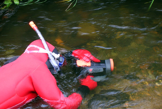 A researcher photographs fish as part of the Comprehensive Pebble Environmental study program.